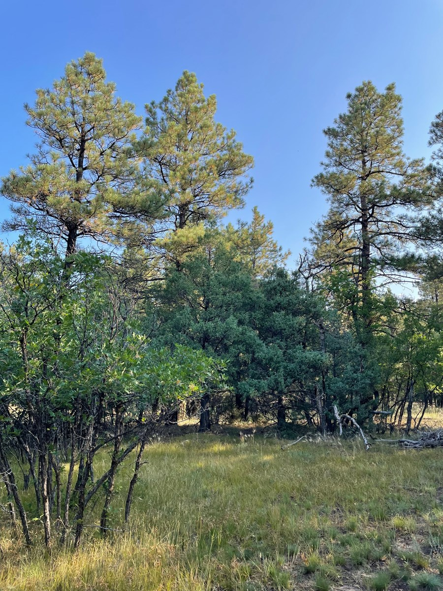 Brazos Canyon Mountain Land for Sale south of Chama NM