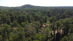 HUNTING & TIMBER LAND FOR SALE JACKSONVILLE TX CHEROKEE CO