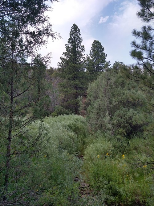 Norwood, CO 365 ACRES, year round access and mountain views