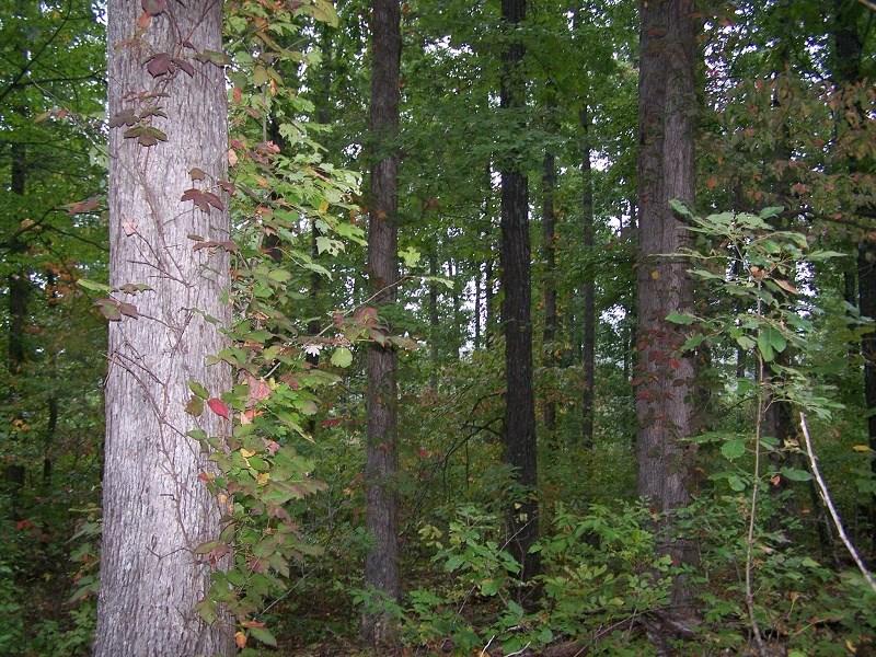 Quality Hunting Property For Sale Arkansas Ozarks