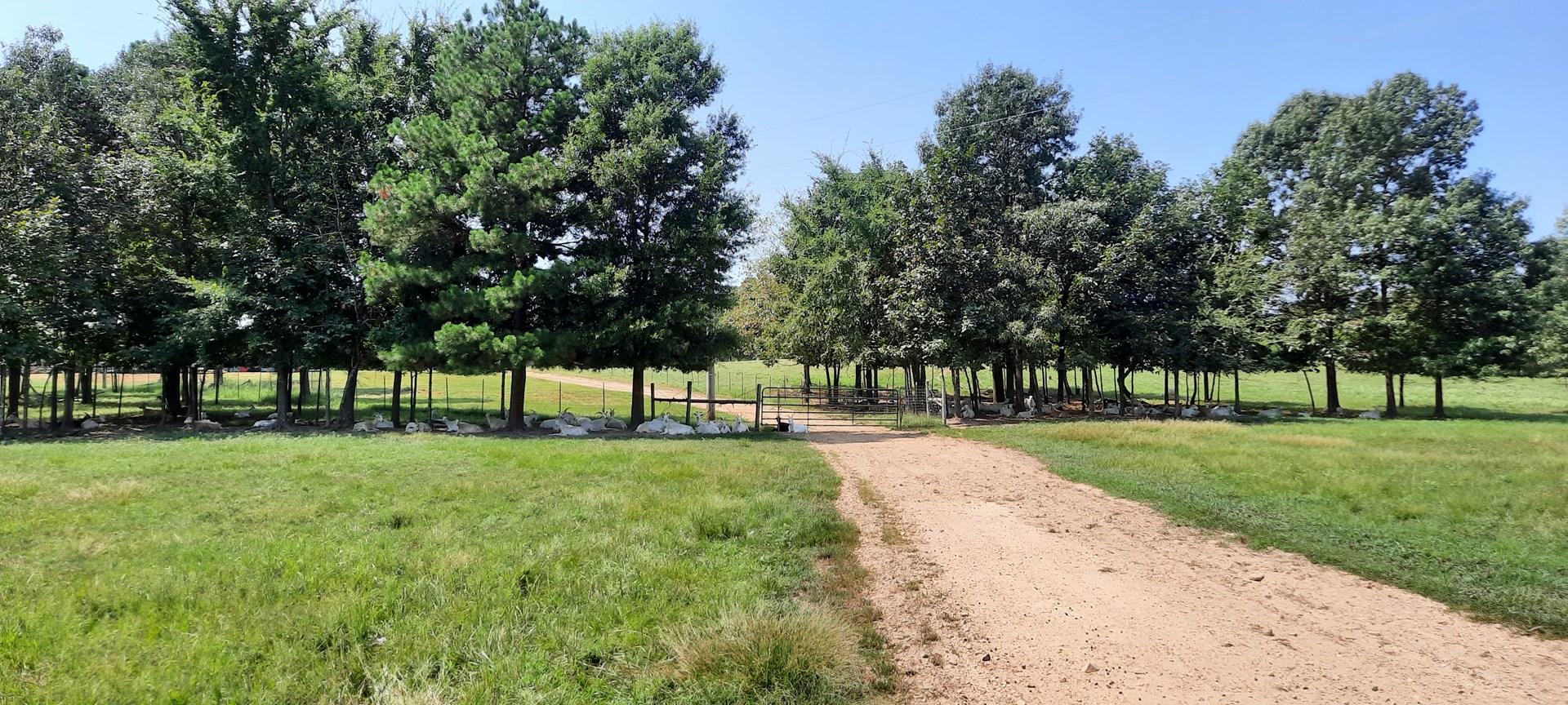 Goat Farm Land For Sale Antlers Oklahoma Pushmataha County