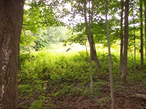 40 ACRES OF WISCONSIN WHITETAIL COUNTRY IN RICHLAND COUNTY