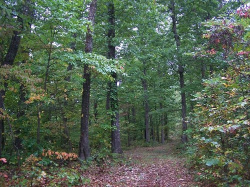 Arkansas Hunting Land For Sale Borders AR Game & Fish WMA
