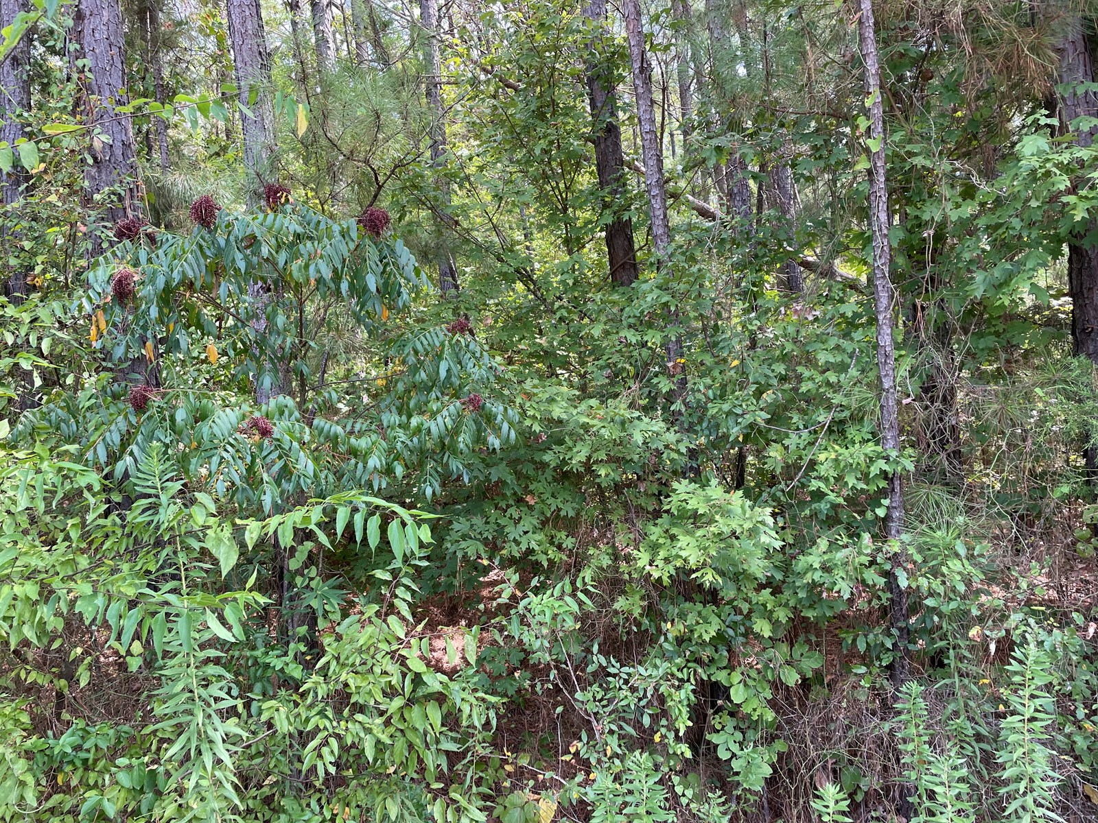Cherokee County Texas Lot For Sale