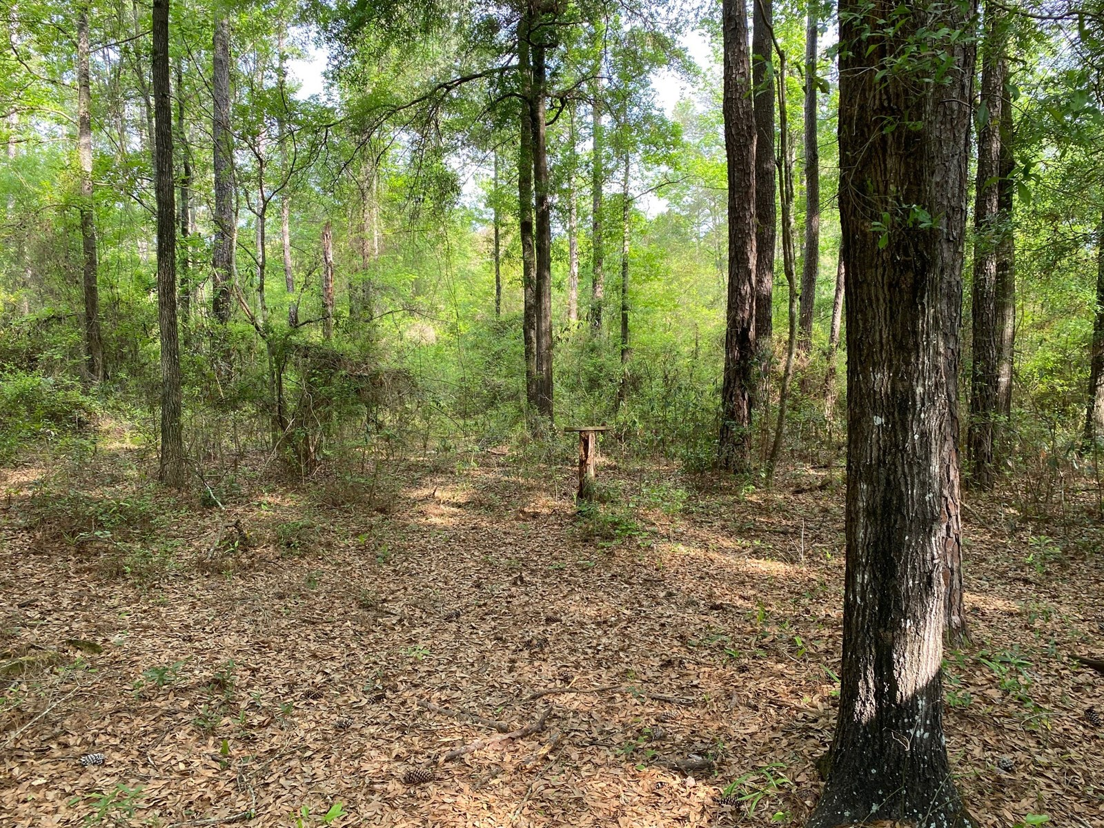 RIVER SUBDIVISION 0.90 AC LOT ONLY $ 25,000.00