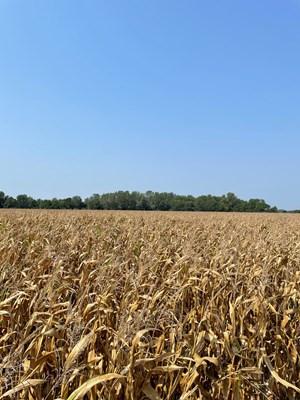 TRACT 3 GERALD E LUKE & MARY E LUKE TRUST FARM LAND AUCTION
