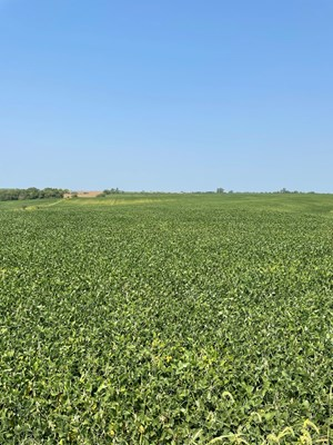 TRACT 2 GERALD E LUKE & MARY E LUKE TRUST FARM LAND AUCTION