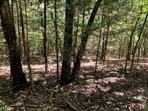 5 ACRES FOR SALE IN YELLVILLE, AR