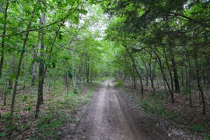 WOODED LAND IN MOUNTAIN VIEW, MO