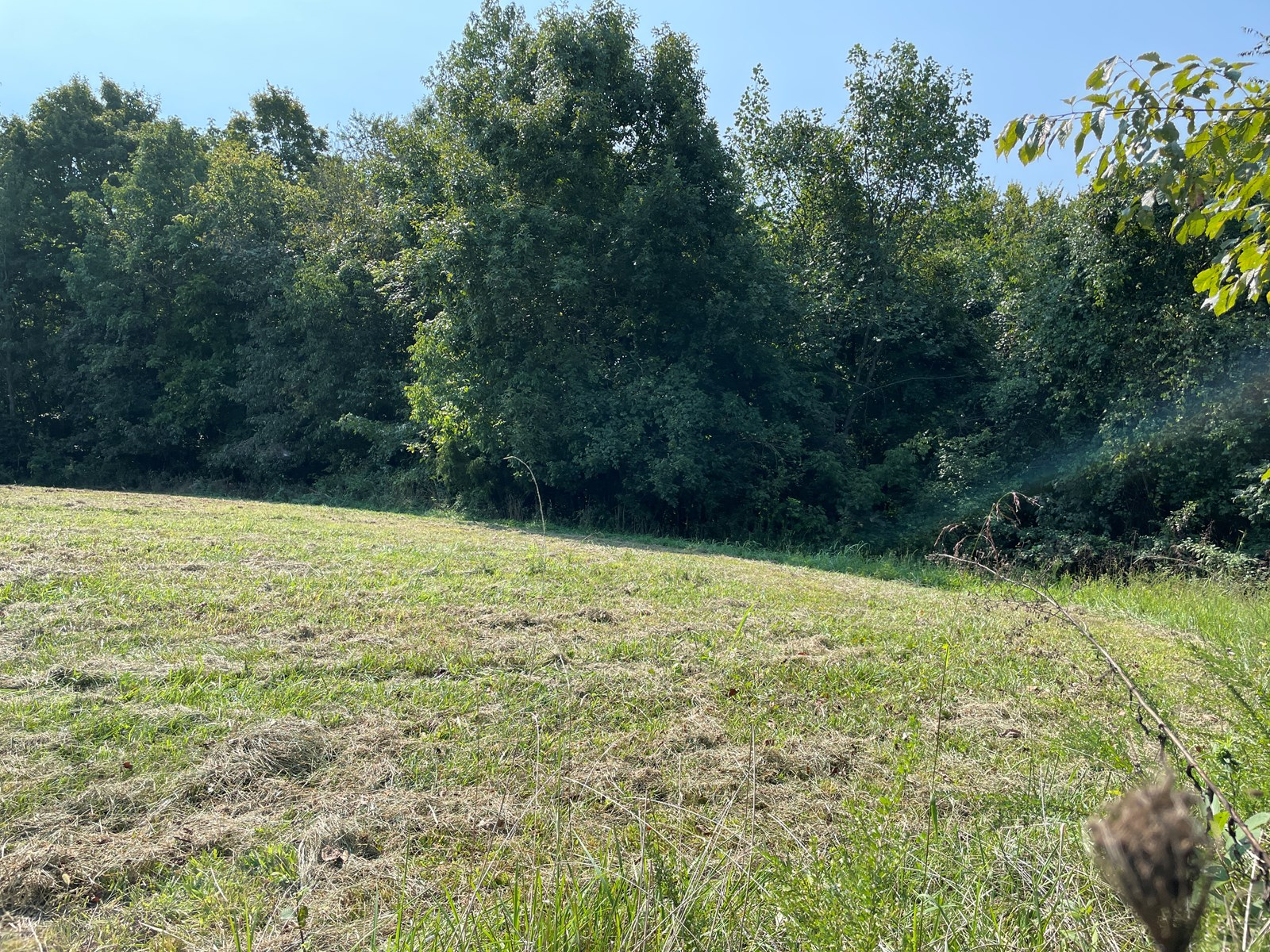 Two residential lots for sale near Smiths Grove, Ky.