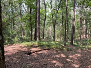 HUNTING LAND FOR SALE JACKSONVILLE TX CHEROKEE COUNTY