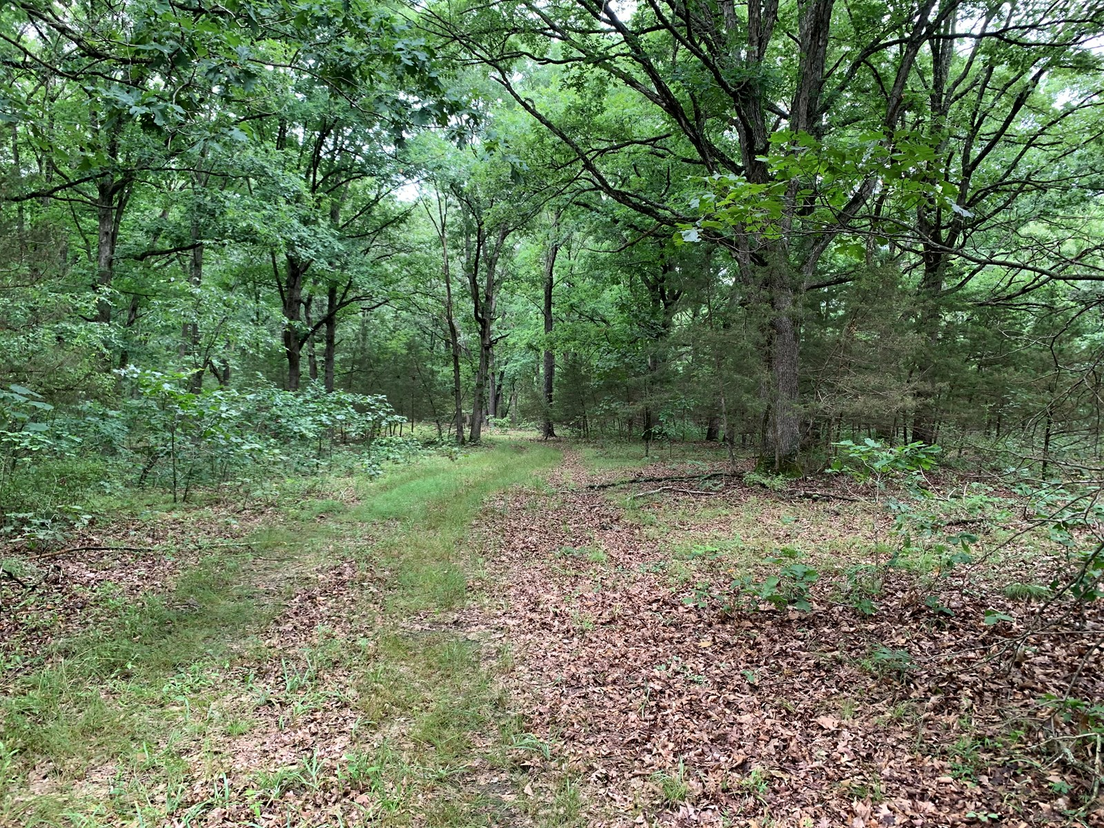 120+/- Wooded Acres for sale Stover Missouri