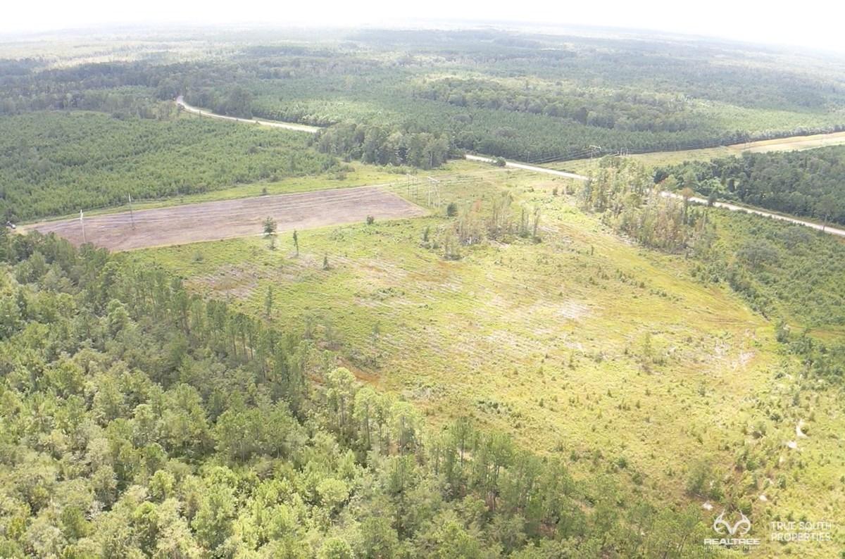 Yemassee / Colleton / Lowcountry Hunting Land