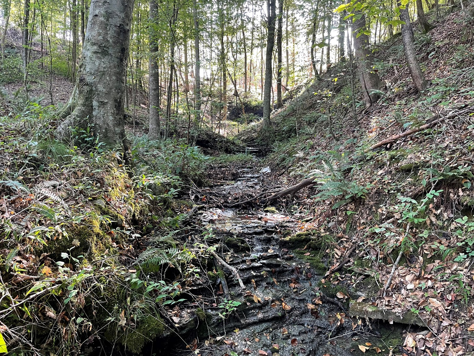 119.85 Acres Vacant land for sale that is ready to hunt!