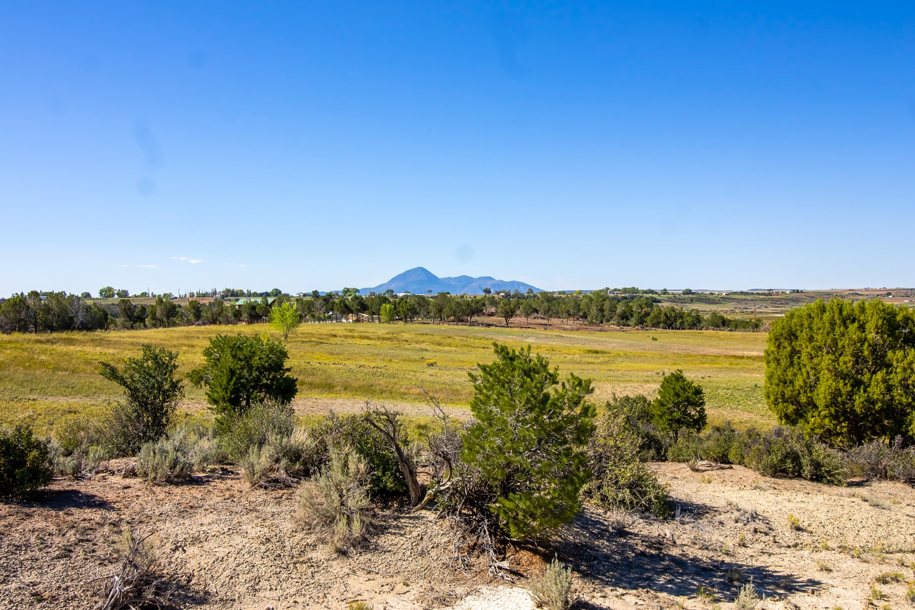 69 Acres of Irrigated Farmland For Sale in Lewis, CO!