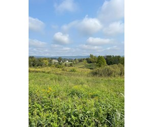 3.08 Unrestricted Acres in Rogersville, TN For Sale
