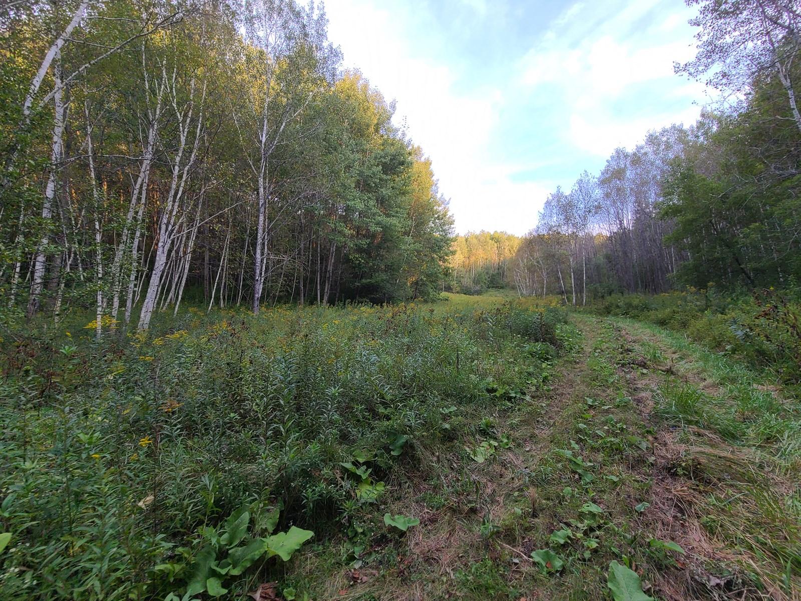 Premier Turn-Key Hunting Property in Northern Monroe County,