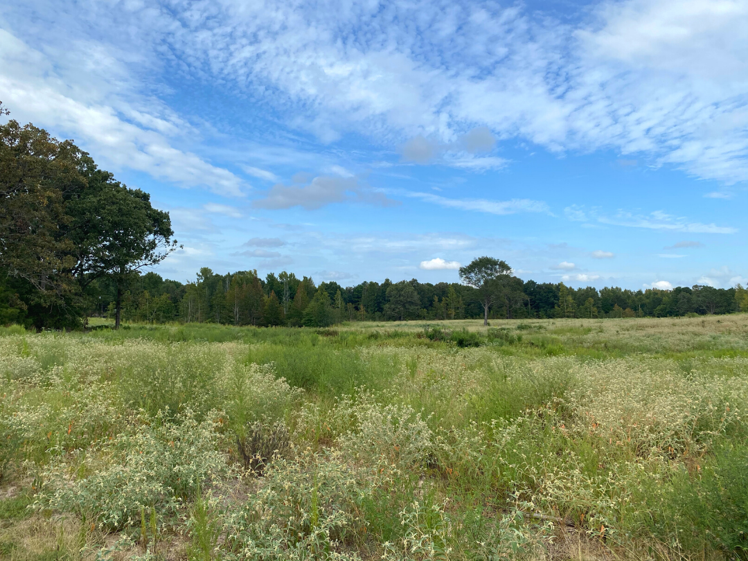 Land for sale in Cass County, TX