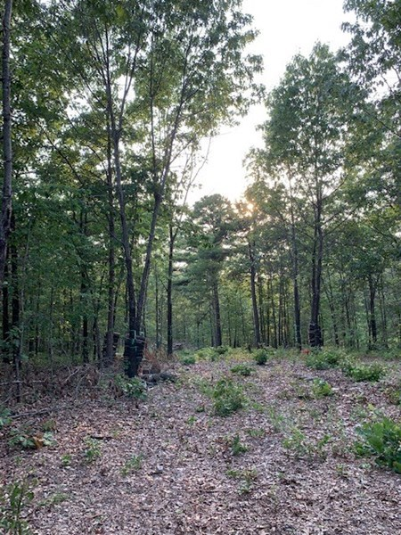 Arkansas Hunting/Recreational Land For Sale Searcy County