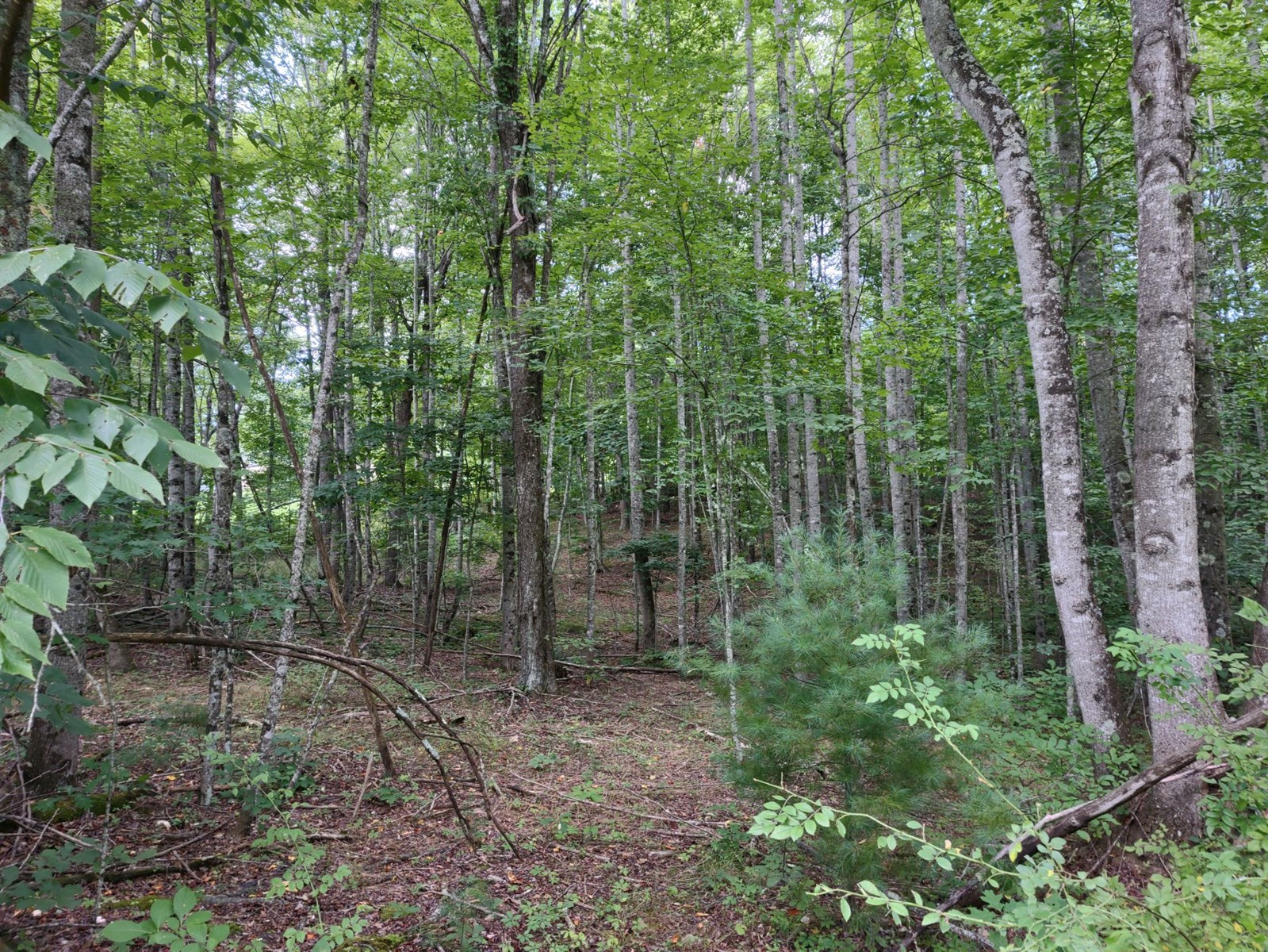 Wooded Land for Sale in Pilot VA