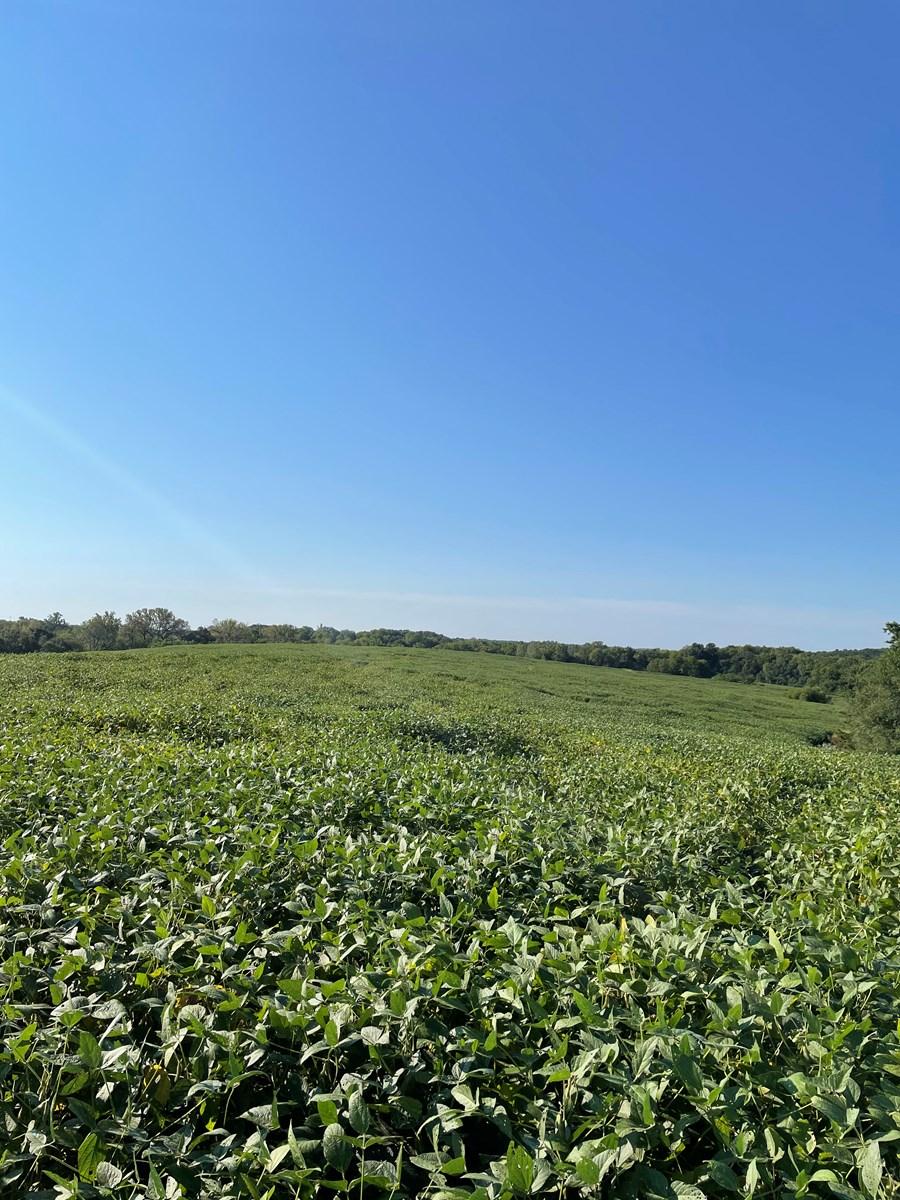 240+/- Acres of Gentry County Missouri Row Crop