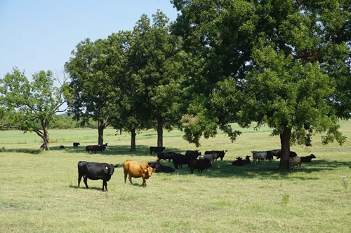 Cattle Ranch with Productive Grassland For Sale  Chandler Ok