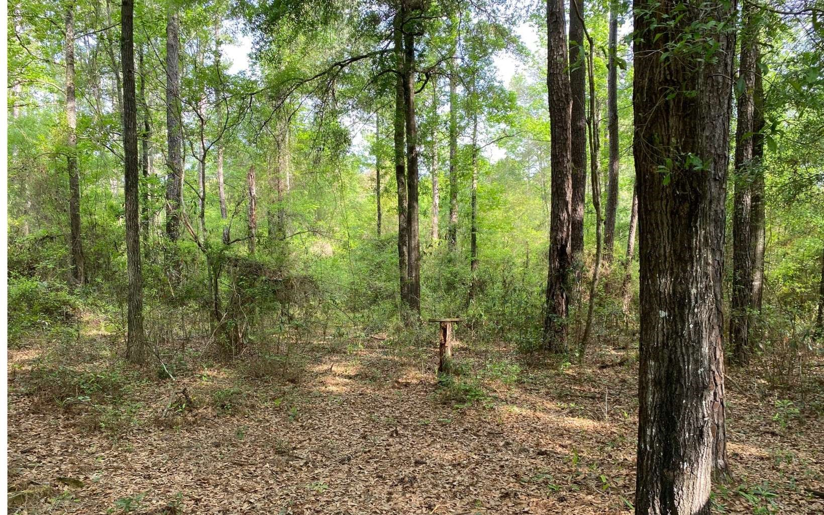 RIVER SUBDIVISION .96 AC LOT FOR ONLY $25,000.00