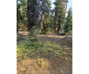 1.80 Acres For Sale in Cal Pines