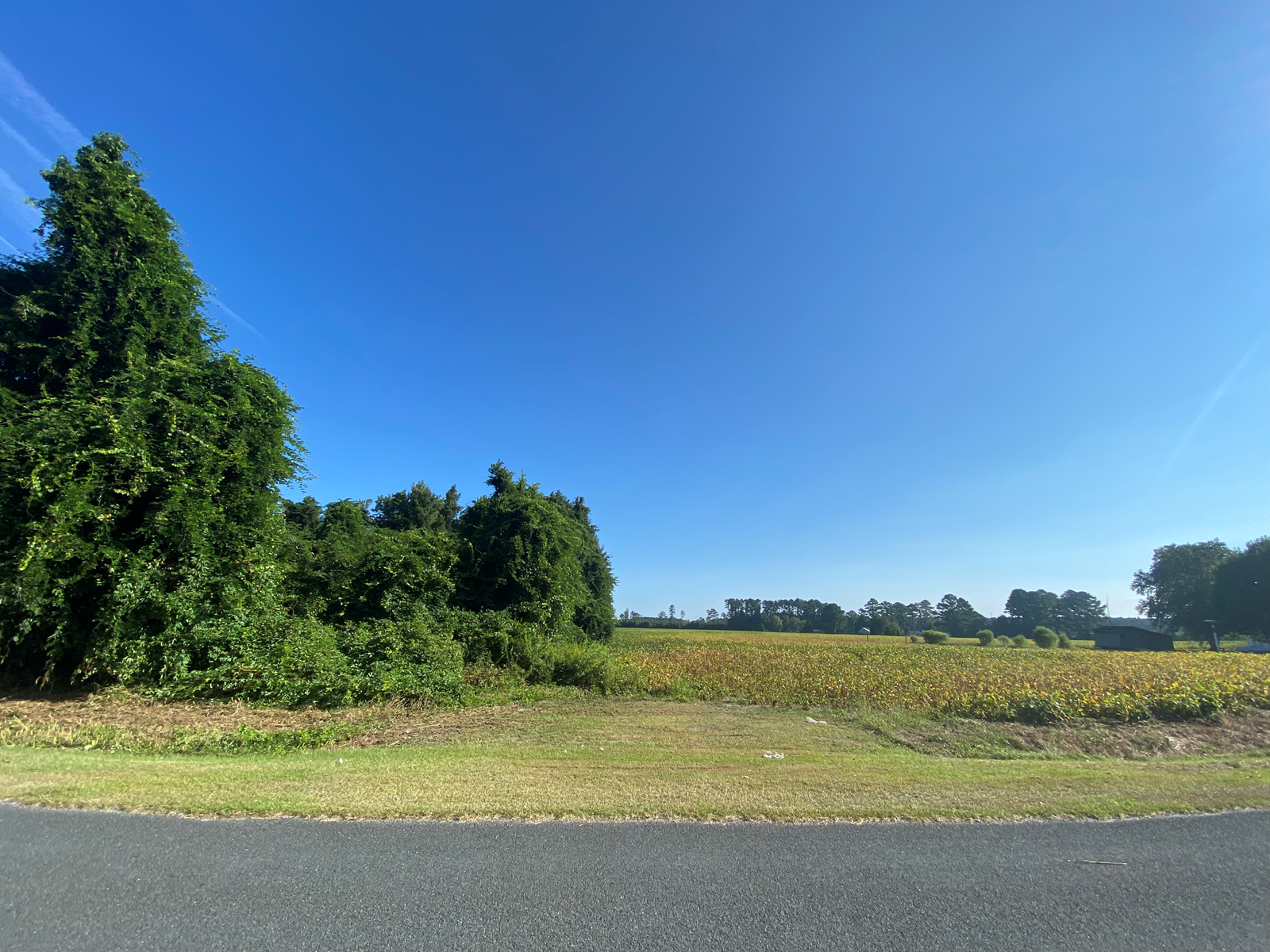 Beaufort County NC Farmland/ Timberland For Sale