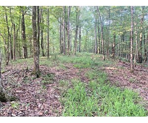 152 Acre Hunting Land for Sale with Creek, Union Church, MS