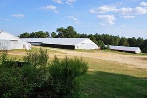POULTRY FARM IN ELLERBE, NC