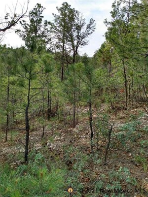 LAND WITH VIEWS IN TIMBERON NEW MEXICO
