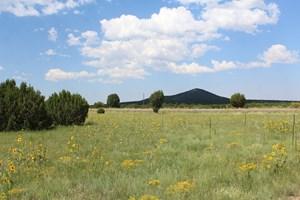 MOUNTAIN RESIDENTIAL LAND FOR SALE NEAR VERNON AZ