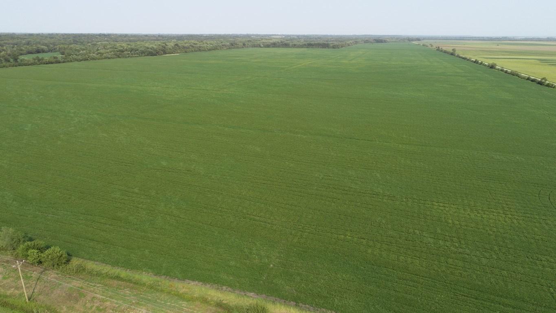 583+/- Acres, Prime Carroll County Bottom