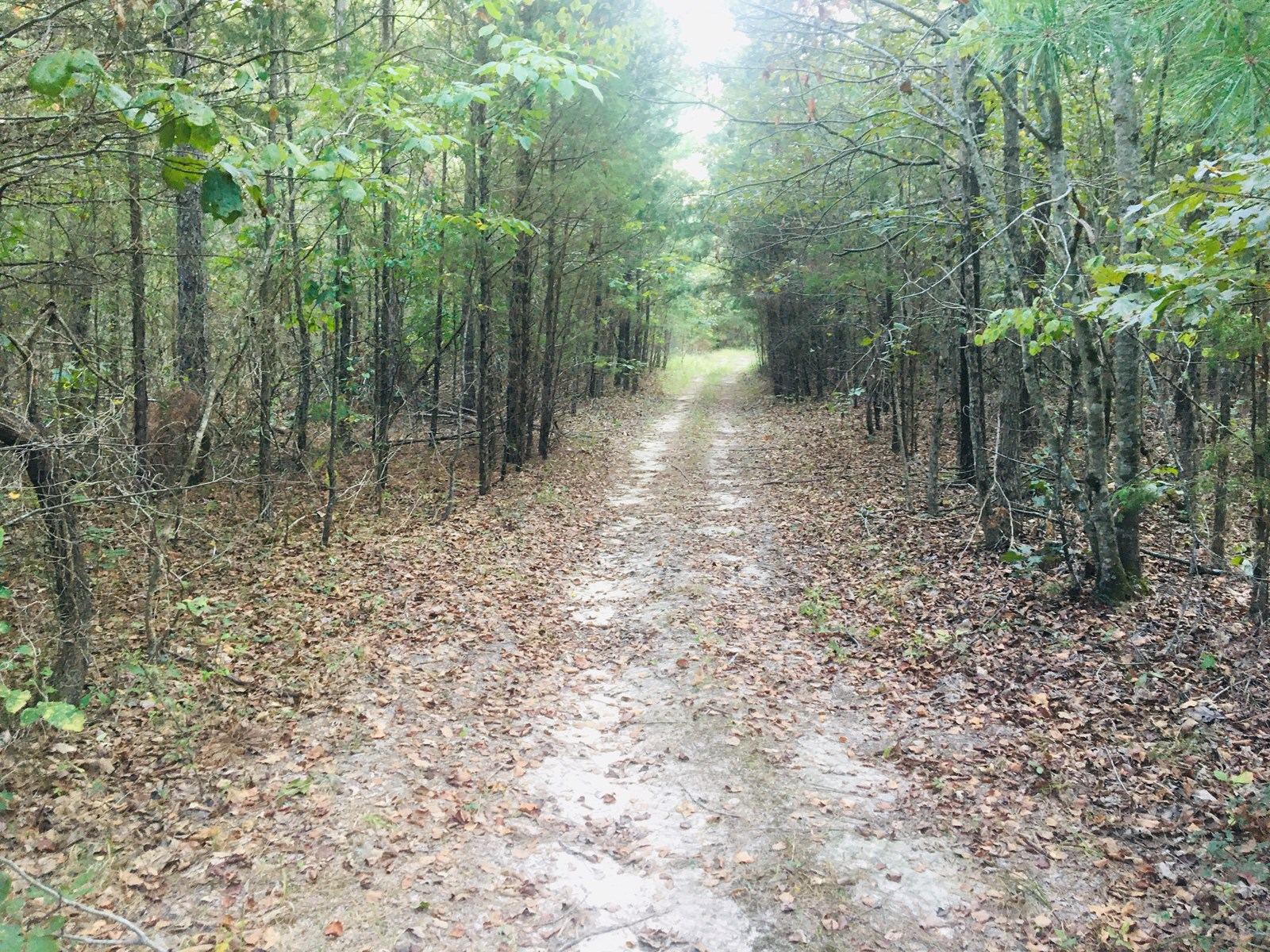 40 ACRES FOR SALE NEAR LAKE NORFORK WITH POWER!