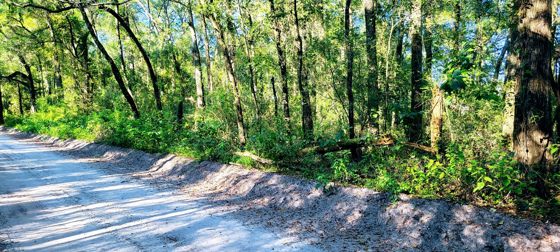 5 ACRES WITHIN MINUTES OF MAYO FOR ONLY $40,000!!!