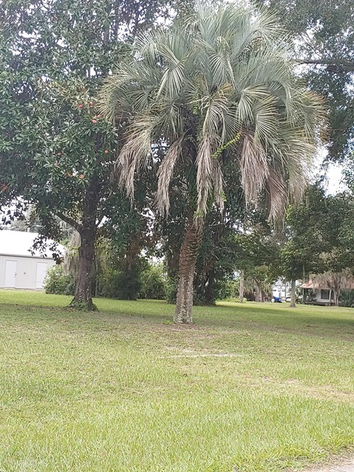 VACANT COMM. LOT IN BRANFORD CITY LIMITS FOR ONLY $25,000.00