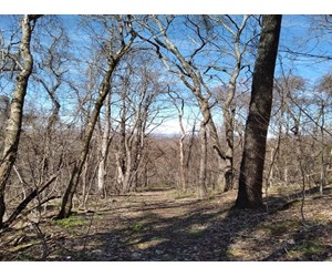 Unrestricted Wooded Property for Sale Grainger County TN