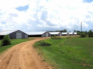 8 HOUSE POULTRY BROILER FARM, 80 ACRES FOR SALE CENTRAL MS