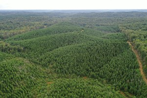 HUNTING PROPERTY FOR SALE IN TENNESSEE