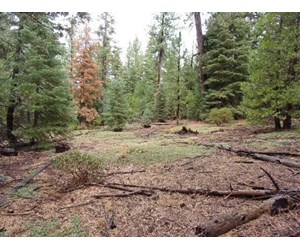 1.8 Acres Off the Grid in Northern CA