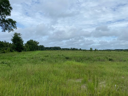 10.01 ACRES WITHIN 1 MILE OF MAYO FOR ONLY $80,000!!!!