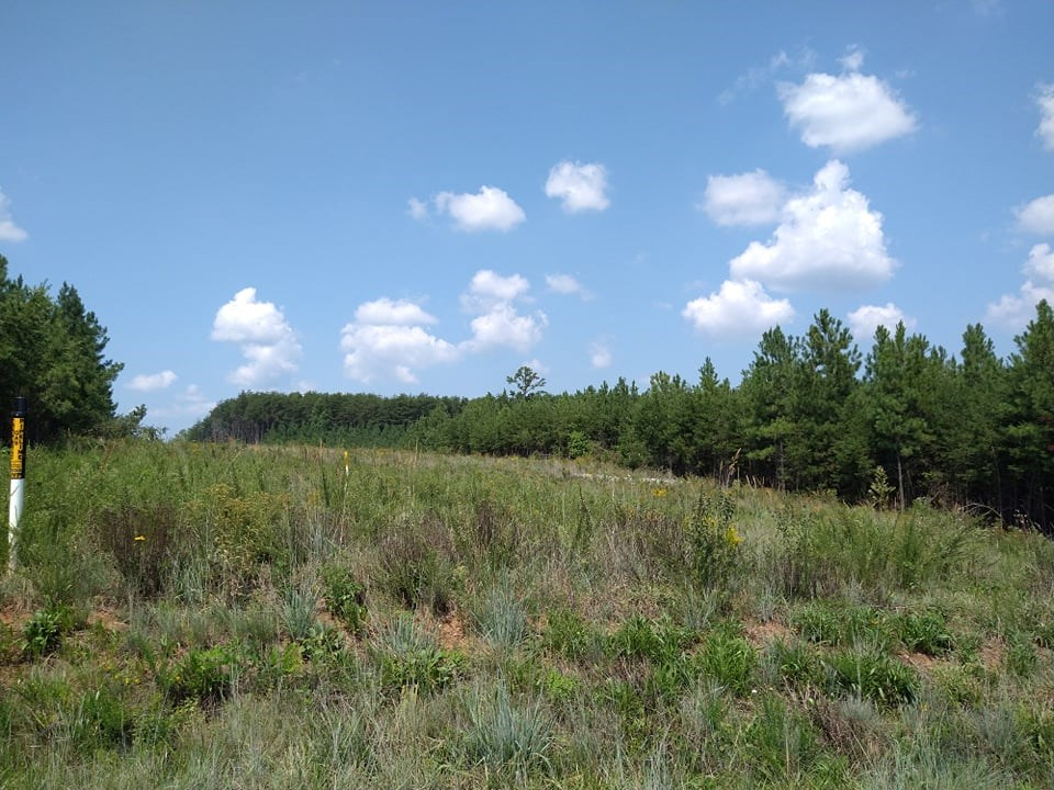 47+/- acre Timber Property In Pittsylvania County, VA
