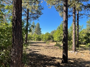 NORTHERN NM MOUNTAIN LAND, BUILDING SITE FOR SALE, CHAMA NM