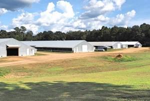 7 HOUSE POULTRY BROILER FARM, 33 ACRES FOR SALE CENTRAL MS
