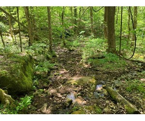 Unrestricted Wooded Property for Sale East Tennessee