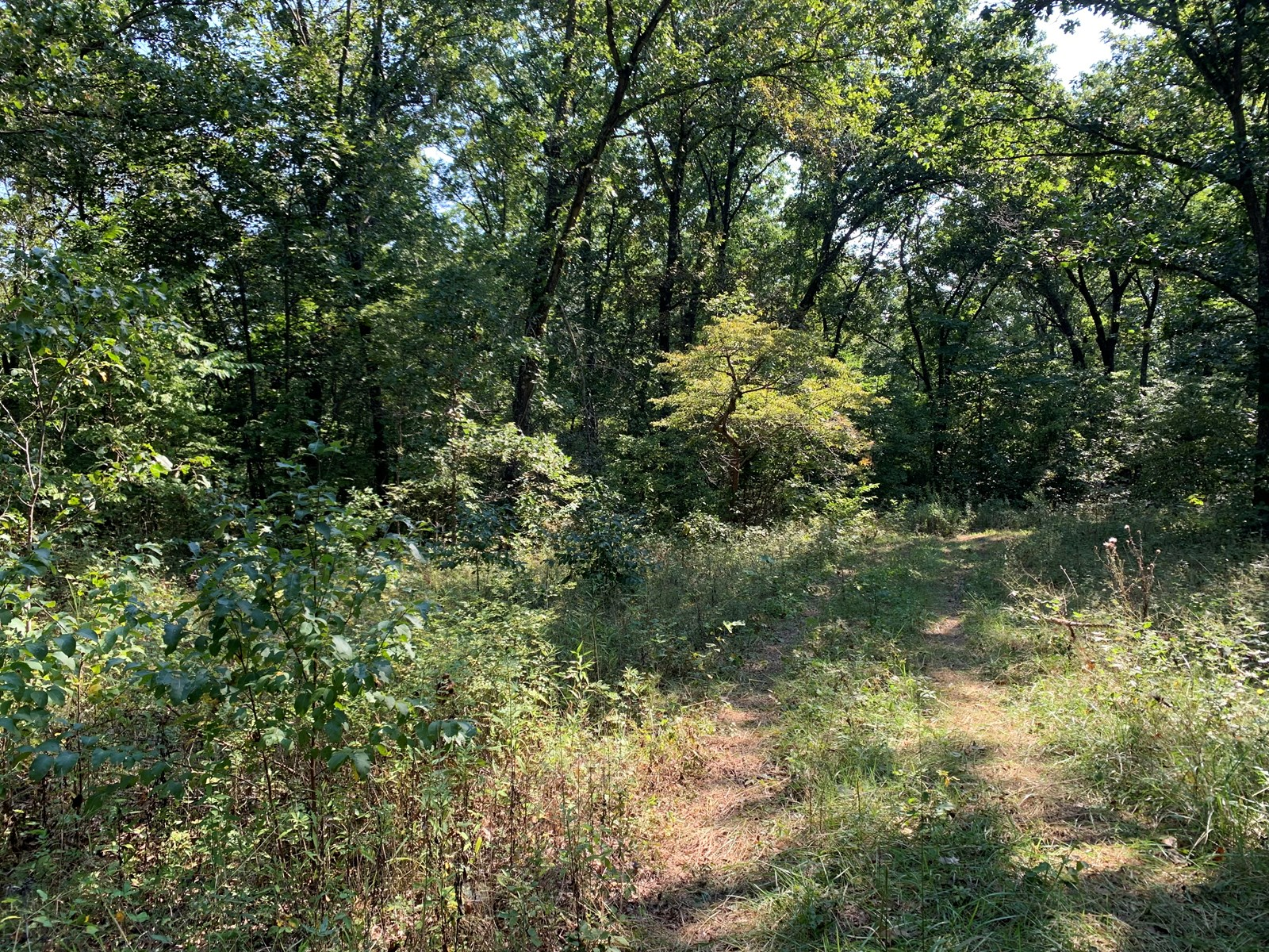 9.25+/- Wooded acres for sale Morgan county Missouri