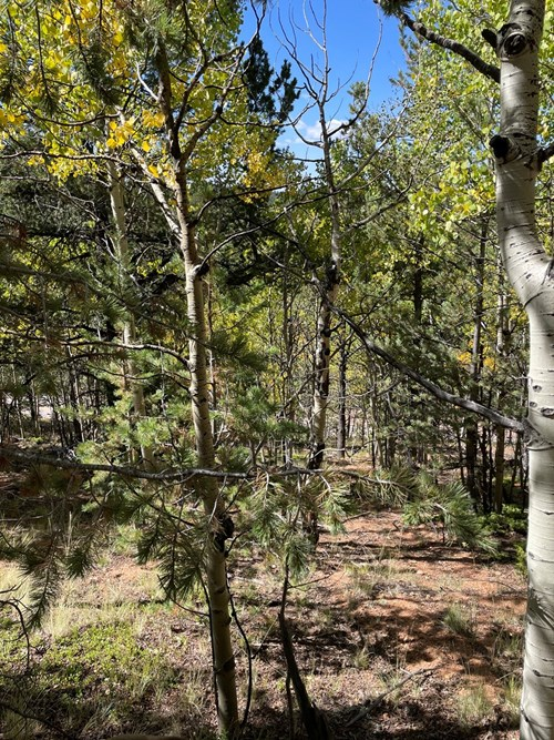 Land for sale in central Colorado