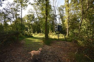 SOUTHERN IN HUNTING LAND WITH WATER FOR SALE NEAR EVANSVILLE