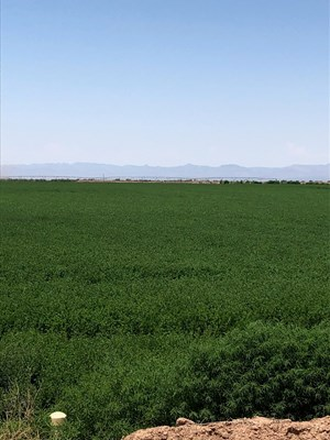 FARM IN SOUTHERN NEW MEXICO